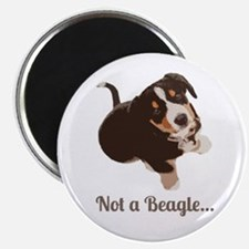 Not a Beagle - Entlebucher Mountain Dog Magnets