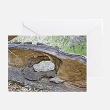 Weathered Desert Wood Greeting Cards (Pk of 10)