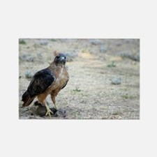 Red Tailed Hawk Catch Rectangle Magnet