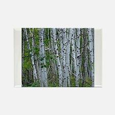 Aspen grove Rectangle Magnet