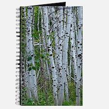 Aspen grove Journal