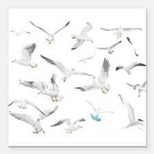 "Birds Square Car Magnet 3"" x 3"""