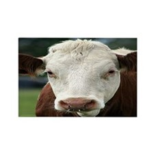 Buster Beefcake the Cow Rectangle Magnet (10 pack)