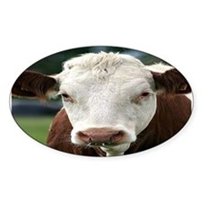 Buster Beefcake the Cow Oval Decal