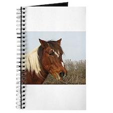 Pinto Stallion Chincoteague Pony Journal