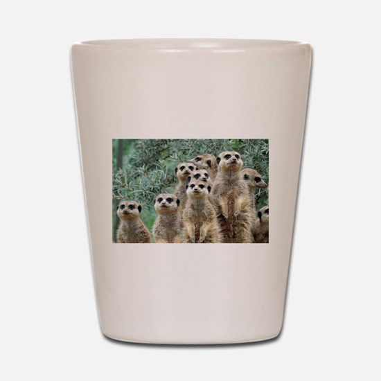 Cute Meerkat Shot Glass