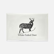 White Tailed Deer Trophy Buck Magnets