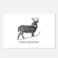 White Tailed Deer Trophy Buck Postcards (Package o