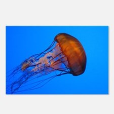 Jellyfish Postcards (Package of 8)