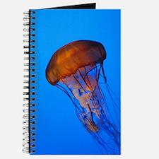 Jellyfish Journal