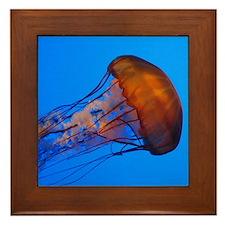 Jellyfish Framed Tile