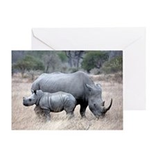 Mother and Baby Rhino Greeting Cards