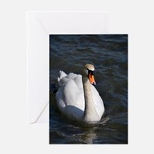 Swan out for a Swim Greeting Card
