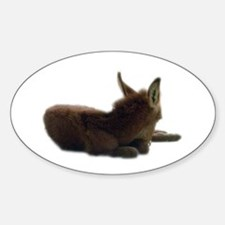 baby donkey Oval Decal