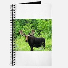 Greenville Moose Journal