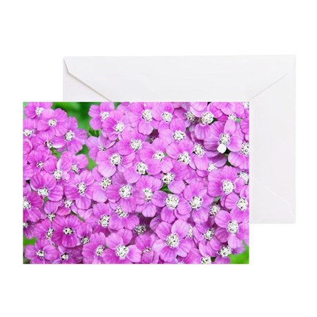 Pink Yarrow Greeting Cards (Pk of 10)