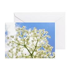 Elderflower Sky Greeting Cards (Pk of 10)