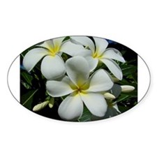 Yellow Center Plumeria Oval Decal