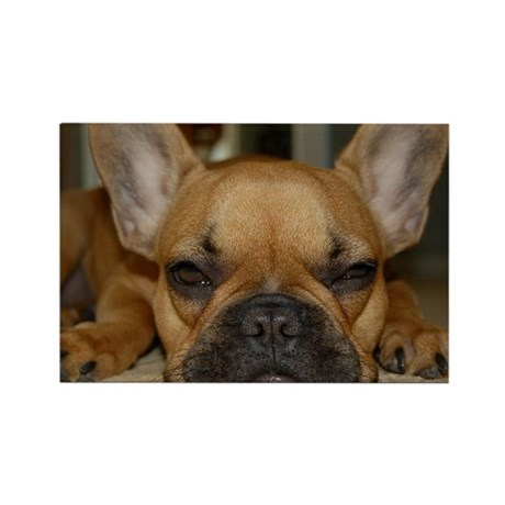 French Bulldog Calendar Rectangle Magnet