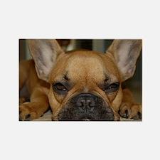 French Bulldog Calendar Rectangle Magnet