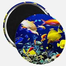 Colorful Aquatic Ocean Life Magnet