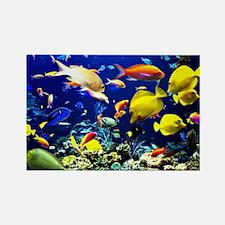 Colorful Aquatic Ocean Life Rectangle Magnet