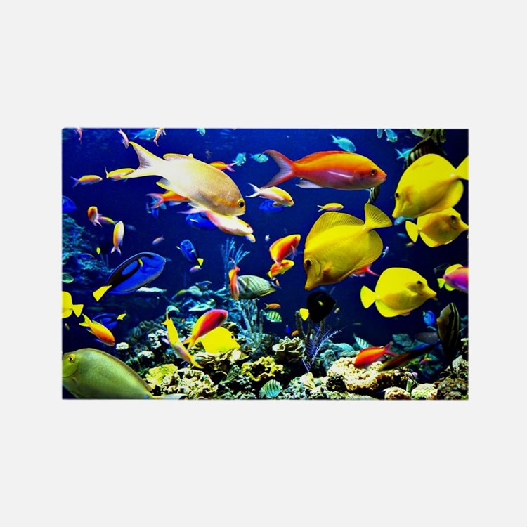 Colorful Aquatic Ocean Life Rectangle Magnet