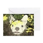 Peek a daisy Frenchie Greeting Cards (Pack of 6)