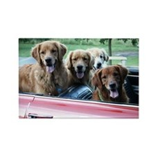 Summer Drive Golden Retriever Rectangle Magnet