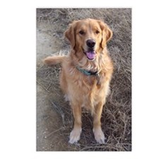 Sit Up! Golden Retriever Postcards (Package of 8)