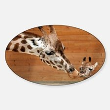 Kissing giraffes Sticker (Oval)