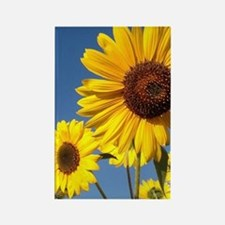 Double Sunflower Rectangle Magnet