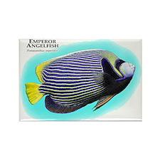 Emperor Angelfish Rectangle Magnet