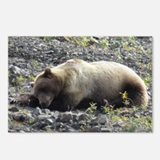 Grizzly Bear Alaska Postcards (Package of 8)