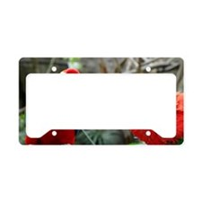 Scarlet Macaws License Plate Holder