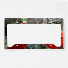 Scarlet Macaws License Plate Holder