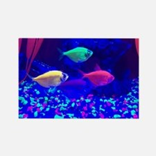 Glofish Magnets