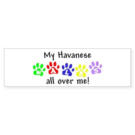 Havanese Walks Bumper Sticker
