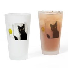 Drinking Glass From the Cat Room