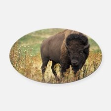 American buffalo Oval Car Magnet