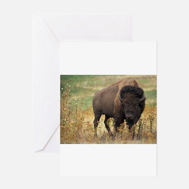 American buffalo Greeting Cards