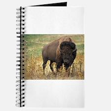 American buffalo Journal