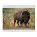 Buffalo Fleece Blankets