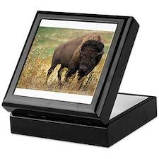 American buffalo Keepsake Box