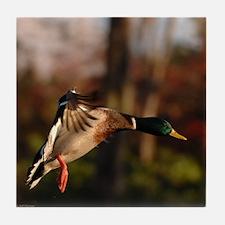 Mallard Duck In Flight Tile Coaster