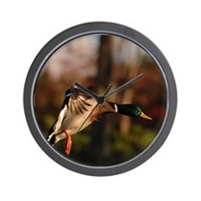 Mallard Duck In Flight  Wall Clock