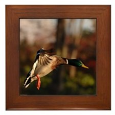 Mallard Duck In Flight Framed Tile
