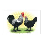 Iowa Blue Chickens Mini Poster Print