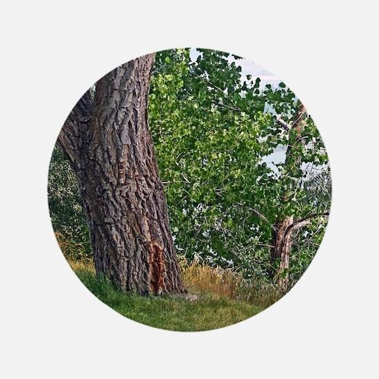 Hyrum dam trees Button
