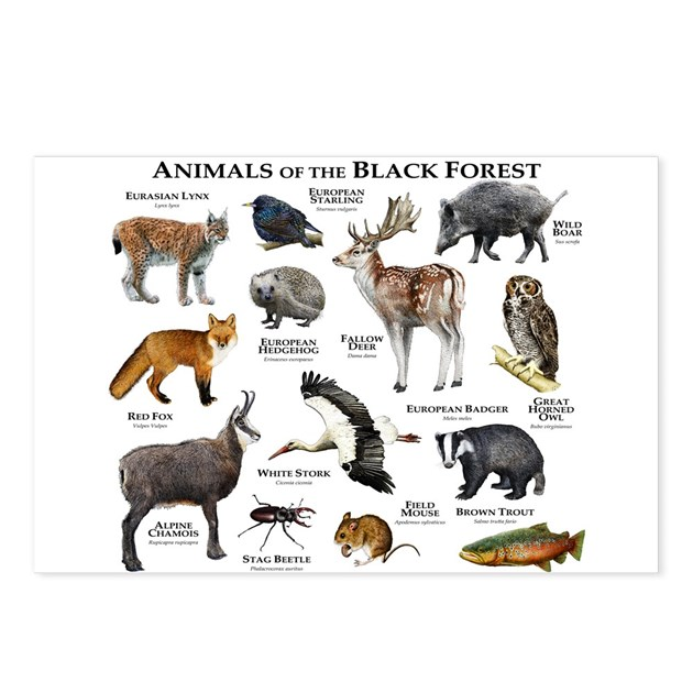 Animals Of The Black Forest Postcards Package Of By